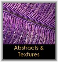 Abstracts & Textures