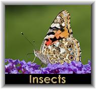 Insects & Molluscs